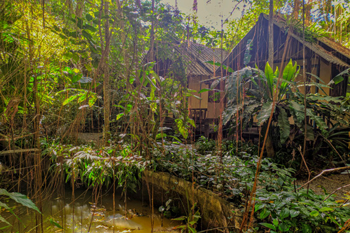 Bungalows-In-Lush-Jungle