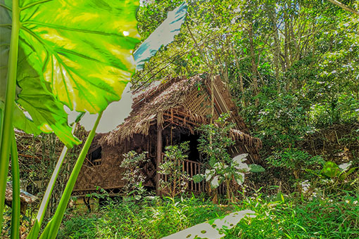 Bamboo-Bungalow-In-Jungle